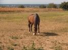 Pferde vom Lindenhof