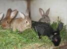 Tiere vom Lindenhof